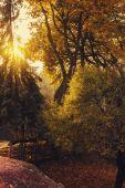 Gün batımında sonbahar yaprakları — Stok fotoğraf