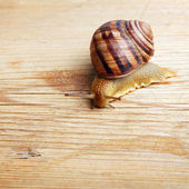 Snail crawling over a piece of wood — Stock Photo