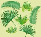 Palm frond with fern — Stock Vector