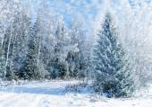 Trees covered with hoarfrost and snow — Stock Photo
