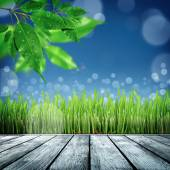 Spring nature background with grass — Stock Photo
