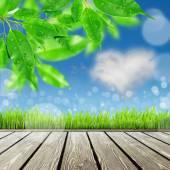 Bahar doğa geçmiş çim ile — Stok fotoğraf