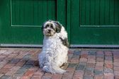 Dog sitting next to the door — Stock Photo