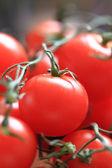 Tomatoes background — Stock Photo