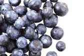 Blueberries isolated — Stock Photo