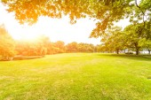 Green lawn with sunlight — Stock Photo