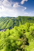 Bamboo forest in south china — Stock Photo