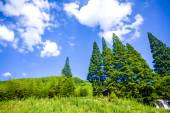 Green tree and blue sky — Stock Photo