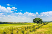 One tree and grass field — Stockfoto