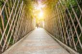 Sidewalk in the bamboo forest — Photo