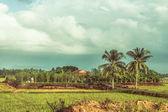 Campo en vietnam — Foto de Stock