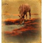 Horse on Red Cloud. Stylization photo under retro postcard. — Stock Photo #61885653