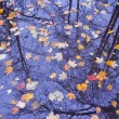 Autumn leaves on water — Stock Photo #56007373