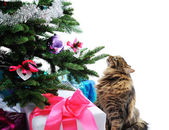 Cat and gifts — Stock Photo