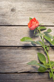 Rose on wooden board — Stock Photo