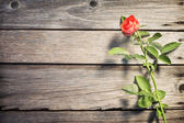 Rose on wooden board — 图库照片