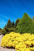 Bahçe ve çevre düzenlemesi — Stok fotoğraf