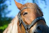 Pferd auf weide. sommertag — Stockfoto