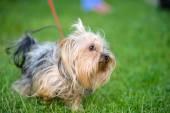 Dorosły pies śmieszne — Zdjęcie stockowe