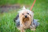 Lustige hund — Stockfoto