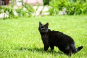 Black cat on green grass — Stockfoto
