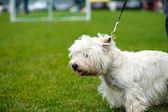 Happy dog on green grass — Stock Photo