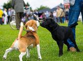 счастливая собака на зеленой траве — Стоковое фото