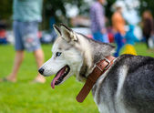 Happy dog on green grass — Foto de Stock