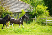 Beautiful Horses at farm. — Foto Stock