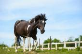 Beautiful horse in meadow — Stock Photo