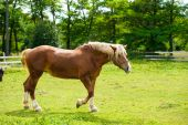 Beautiful horse at farm — Foto Stock