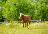 Beautiful horse at farm — Stock Photo
