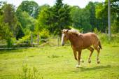 Beautiful horse at farm — Stock Photo