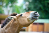 Funny brown horse — Stock Photo