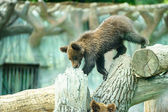 Cute Bear Cub — Stock Photo
