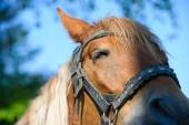 Portrait of Funny horse — Stock Photo