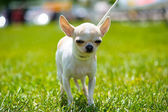 Funny dog on meadow — Stock Photo