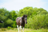 Beautiful Horse at farm. — Stock Photo