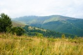 Summer in the mountains. Carpathian — Stock Photo