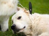 Funny pes na louce — Stock fotografie