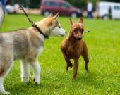 Забавные собаки на лугу — Стоковое фото