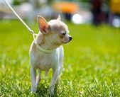 Vuxen söt hund — Stockfoto