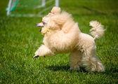 Volwassen schattige hond — Stockfoto