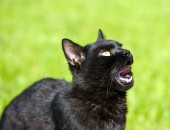 Black cat on green grass — Stock Photo