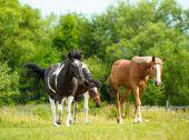 Beautiful Horses at farm. — Stockfoto