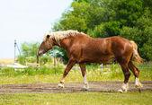 Beautiful Horse at farm. — Stockfoto