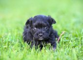 Cute puppy in grass — Stock Photo