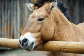 Portrait of Funny horse — Stock Photo