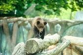 Cute Bear Cub — Stock Photo