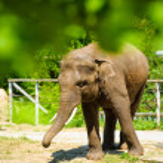 Big wild elephant — Stock Photo #55921877